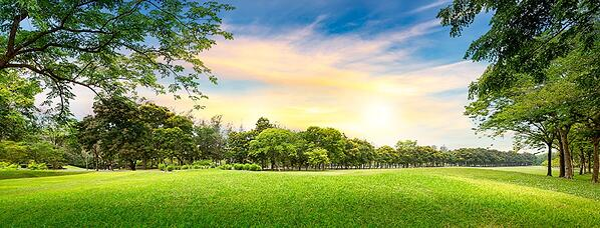 6. Field